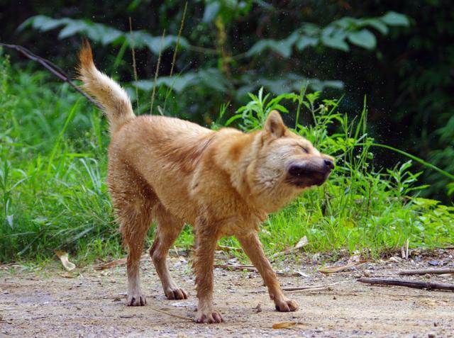 盤點五種聽話服從性高的狗狗。最聽話的反而飼養的人越來越少 - 每日頭條