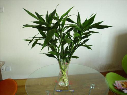 還在用傳統的土培種植嗎?現在流行室內水養植物。更環保更時尚 - 每日頭條