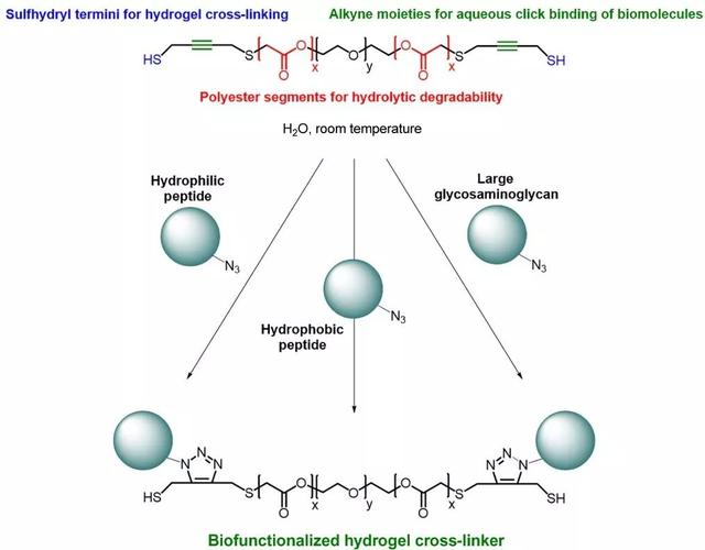 《Science》子刊:組織工程用可生物降解水凝膠交聯劑 - 每日頭條