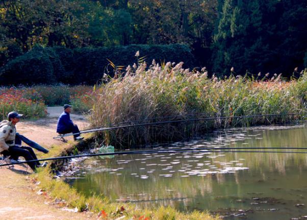 釣魚新手不知道怎麼選?常見漁具的種類和使用技巧盤點 - 每日頭條