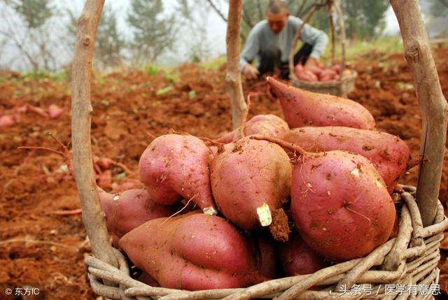 地瓜不是土豆。發芽氧化也能吃。你敢不敢 - 每日頭條
