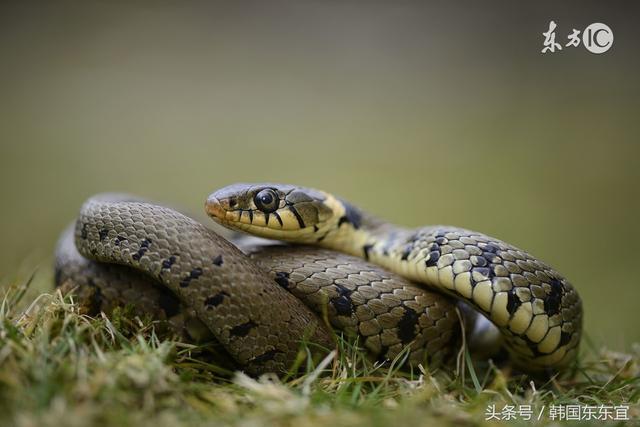 1965年出生:52歲屬蛇人的終生壽命。你敢看完嗎? - 每日頭條