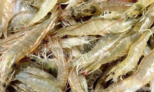 這些蝦你吃過幾種?太迷人啦! - 每日頭條