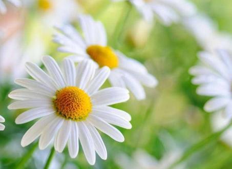 十二月份開什麼花 12月會開花的花卉大全 - 每日頭條