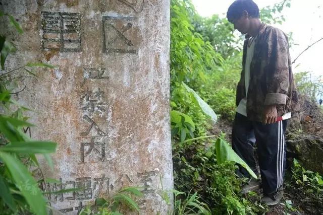 用生命在戰鬥,研究人員在測算了樹齡之後確認,技揚四海的中國解放軍排雷戰士! - 每日頭條
