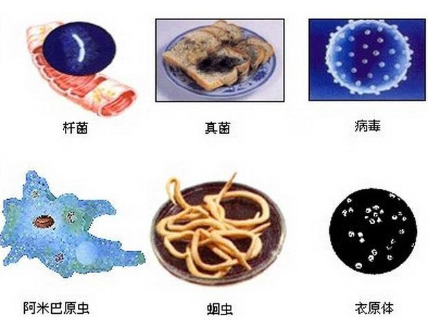 危害人類的病原體微生物:一毒二蟲三菌四體 - 每日頭條