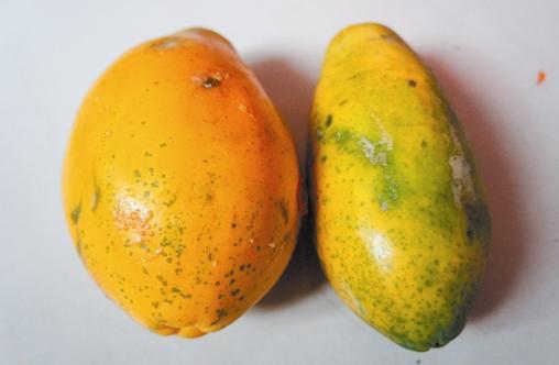 木瓜功效奇特並有公母之別,你知道怎麼區分嗎? - 每日頭條