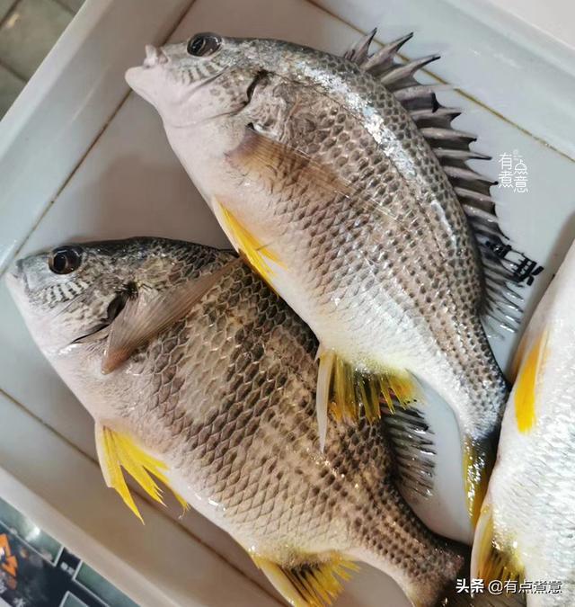 買魚時。優先選擇這「8種魚」。刺少肉多營養高。很適合給孩子吃 - 每日頭條