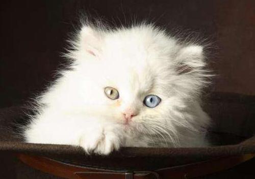 貓咪貧血了怎麼辦?可以用生血膏嗎? - 每日頭條