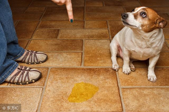 狗狗有這5個表現,就是在「作死」,趕緊糾正,不然後果嚴重! - 每日頭條