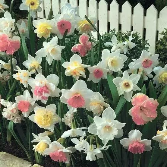 各種花的英文表達和浪漫花語 - 每日頭條