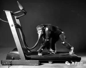 瘋狂人類進化史 解讀3 直立行走帶來的好處與煩惱 - 每日頭條