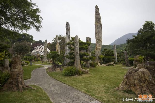 深圳仙湖植物園有什麼好玩的 - 每日頭條