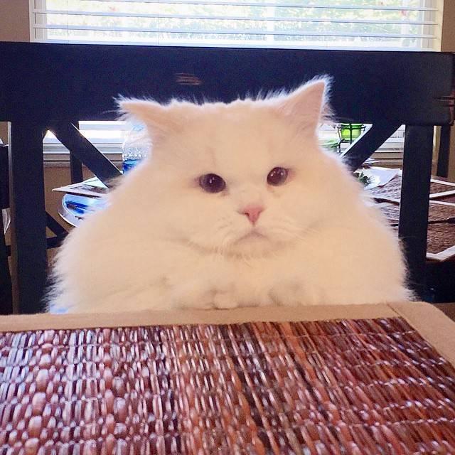 路邊等死的流浪貓被救助後。網友:這哪是救助啊。明明換了副皮囊 - 每日頭條