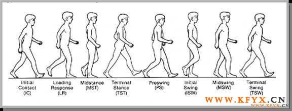 步態分析:常見病理步態 - 每日頭條