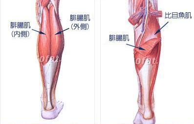運動解剖:小腿肌肉分析 - 每日頭條