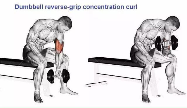 男人的手臂怎麼練才能更粗?健身房鍛鍊 VS 徒手鍛鍊最全圖解! - 每日頭條