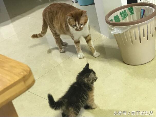 母貓竟然吃掉了剛生出來的小貓。這到底是怎麼回事大家還不知道吧 - 每日頭條