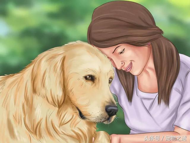 如何有效的訓練你家狗狗到固定地方大小便? - 每日頭條