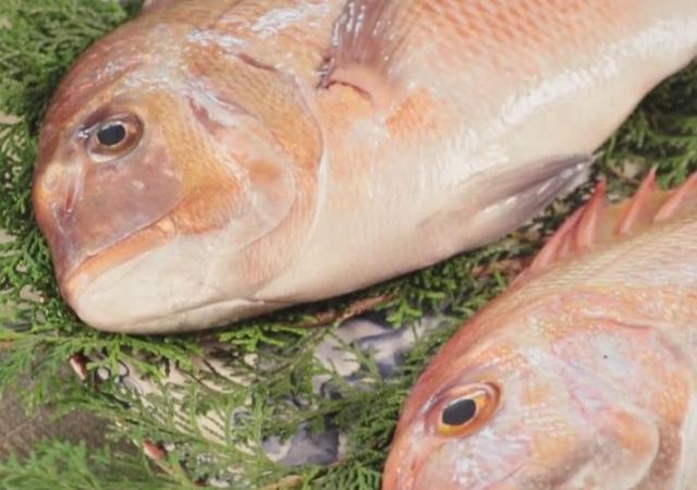 海鮮知識大普及。南哥教你分辨養殖與野生鯛魚該如何購買 - 每日頭條