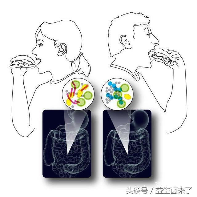 最省力減肥:益生菌21天減肥法,不節食,輕鬆減肥! - 每日頭條