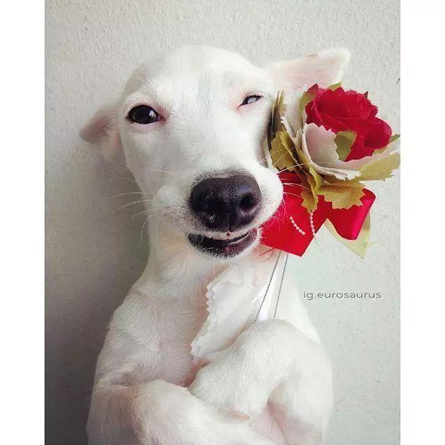 K9告訴你——「誤食野花要狗命」。盤點對狗狗有害的植物篇 - 每日頭條