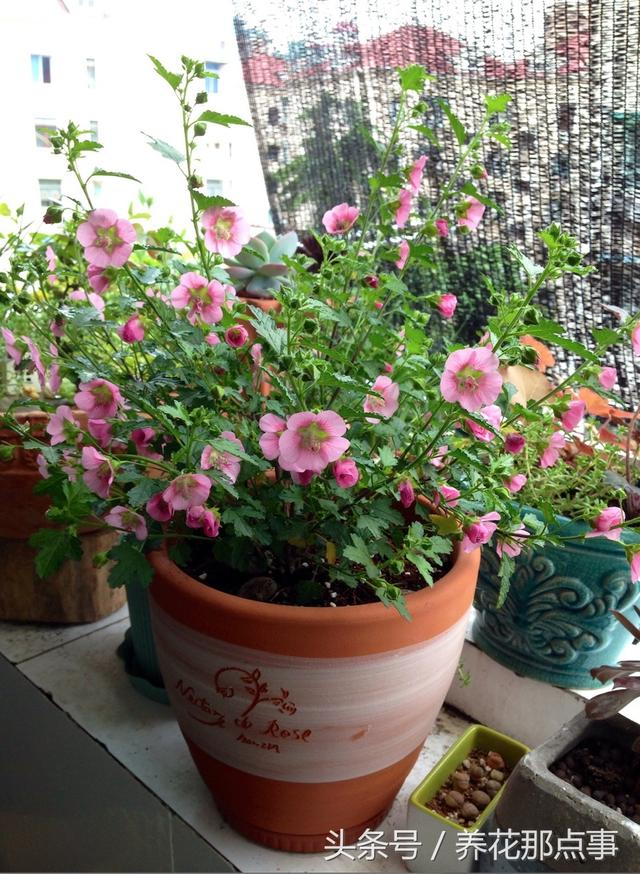 什麼花值得養。這10種花既好養花期又長。是最值得養的植物 - 每日頭條