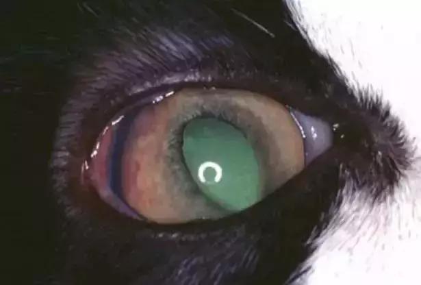 主人帶貓咪絕育結果查出絕癥,治癒率僅5%,治療!還是安樂死? - 每日頭條