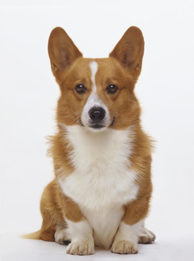 狗的種類壽命排行榜 - 每日頭條