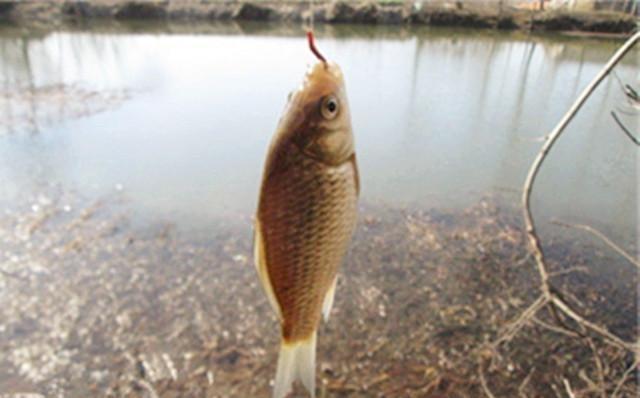 問答解惑:教你夏季釣鯽魚如何輕鬆爆護 - 每日頭條