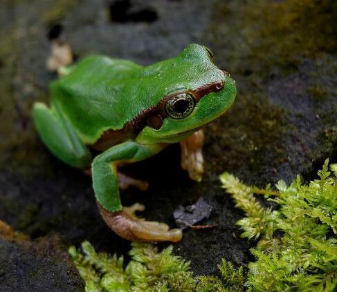 青蛙人工養殖各階段怎麼管理。青蛙生長每個階段怎樣去餵養與保護 - 每日頭條