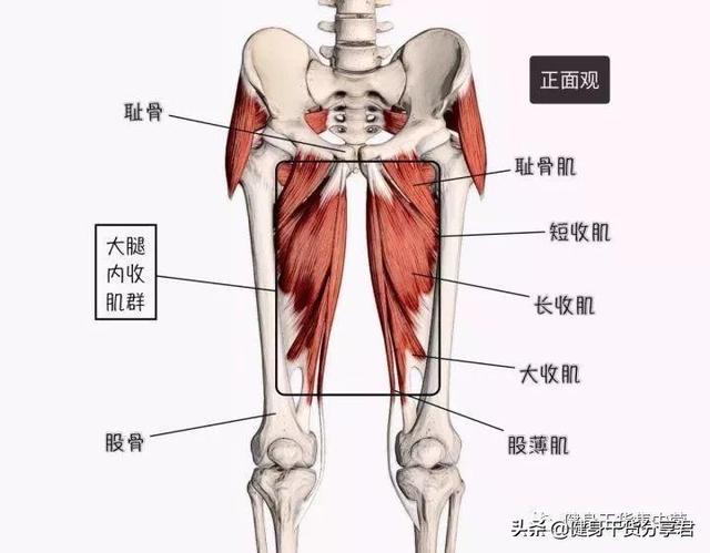 腿部前側,後側和內側,需要練哪些肌肉? - 每日頭條