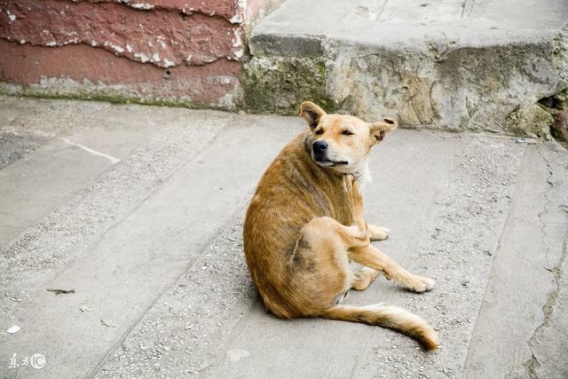 狗狗身上有跳蚤怎麼辦?簡單一招,輕鬆快速讓跳蚤掉光光 - 每日頭條