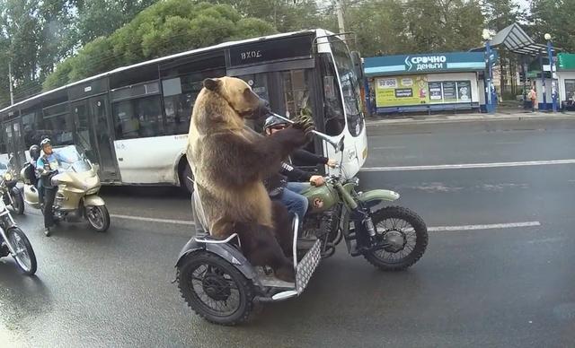 路遇一頭戰鬥民族的熊:坐在摩托車上吹喇叭 - 每日頭條