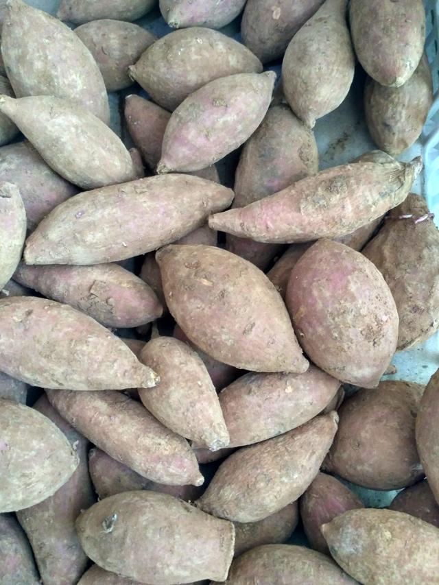 蕃薯可以做很種多原材料,多得算不清 - 每日頭條