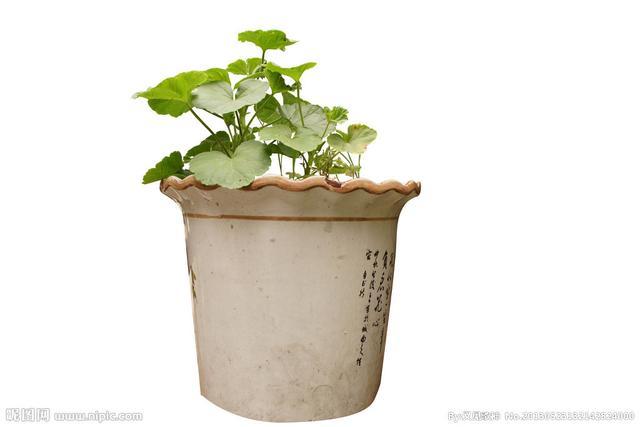 養花不懂選花盆。你永遠也看不到植物花開! - 每日頭條