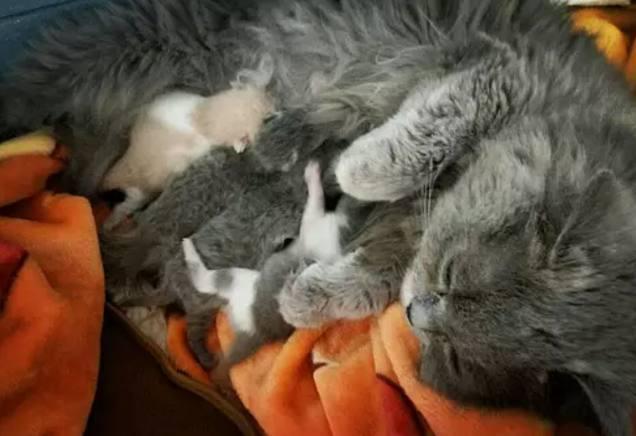 貓咪懷孕兩個月生了4隻小奶貓,閨蜜看到其中兩隻,直呼要抱走! - 每日頭條