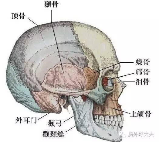 讀一讀解析顱底骨折 - 每日頭條