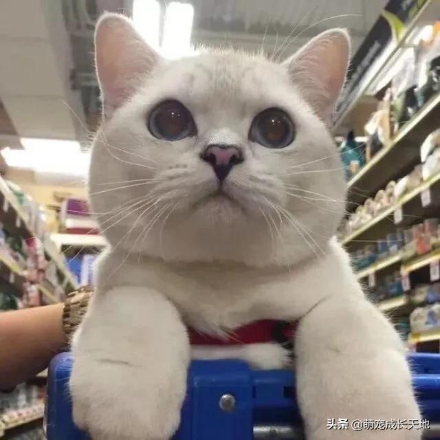貓咪該吃什麼好,主食和副食搭配,這樣營養又健康哦 - 每日頭條