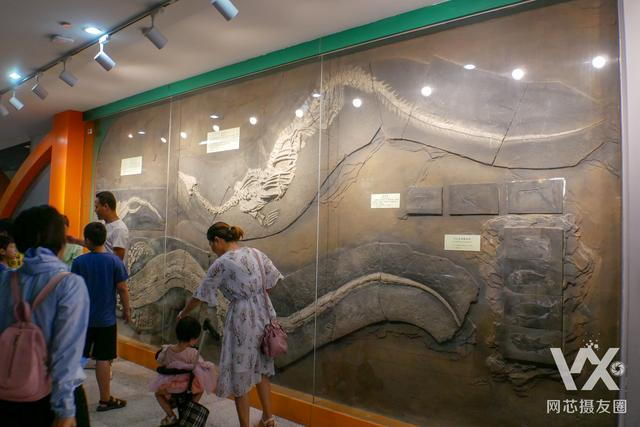 來這 漫步「侏羅紀公園」--河南省地質博物館(下) - 每日頭條