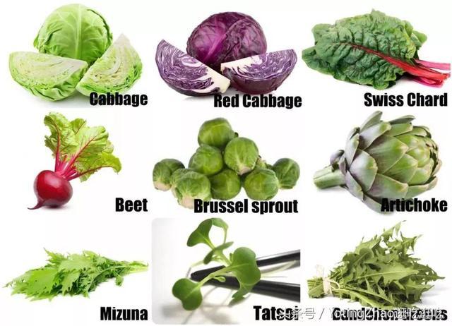 美國著名Raw Food烹飪導師的3道生機素食食譜 \\沙拉菜中英圖對照 - 每日頭條