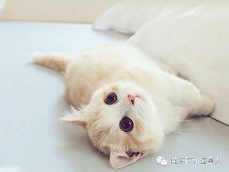 貓咪白天睡覺,晚上鬧騰?5個小技巧能讓貓奴們睡個好覺 - 每日頭條