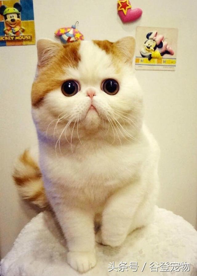 貓主怎樣正確的給貓咪補充維生素b。預防貓蘚等常見皮膚病 - 每日頭條
