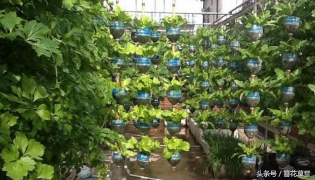退休老人撿了1000個塑料瓶。在樓頂造了個菜園子。全自動管理 - 每日頭條