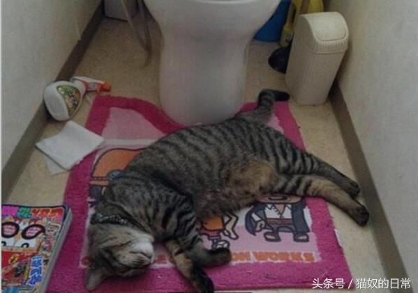 到哪裡都能睡!18個你意想不到的貓咪睡覺地點 - 每日頭條