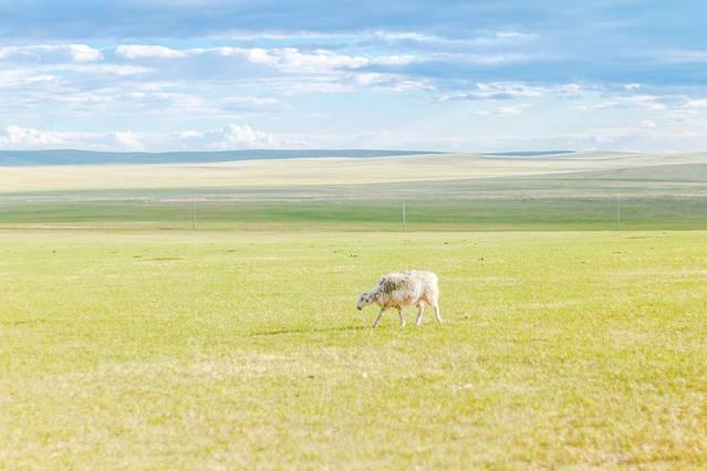 呼倫貝爾:夏日未至。高唱一曲草原牧歌。眷戀你的風情萬種 - 每日頭條