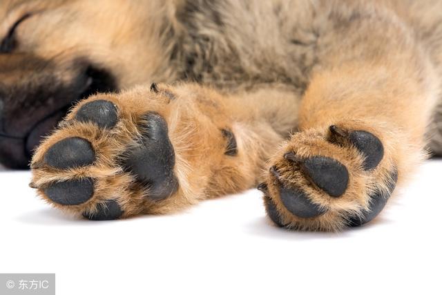 狗狗出現這「5種情況」。說明要給它除臭了! - 每日頭條