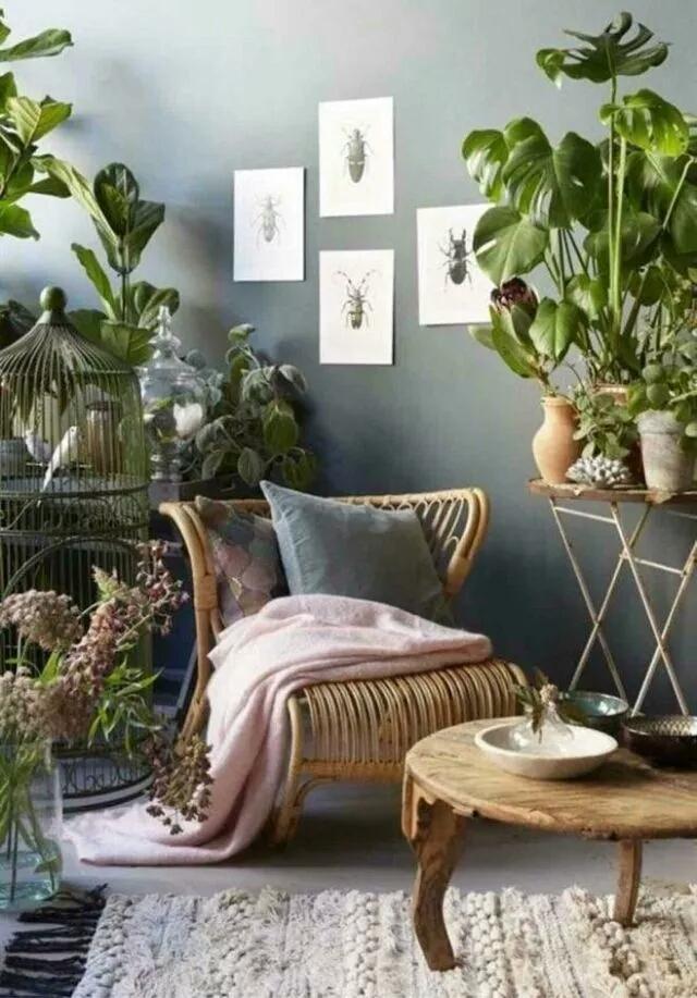 植物裝飾房間的效果圖 - 每日頭條