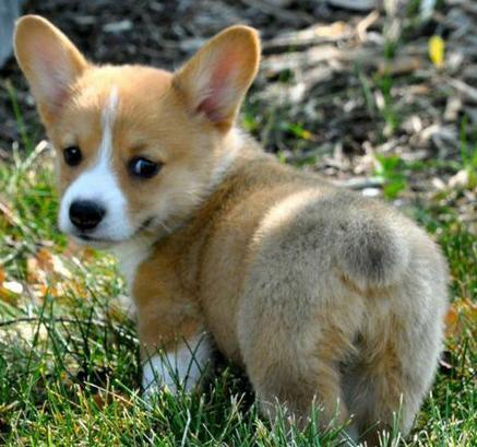 23種最常見的寵物狗。你最喜歡哪一隻。裡面有你家狗狗嗎? - 每日頭條