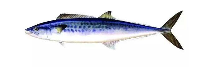 東海海域每個季節釣什麼魚種分享 - 每日頭條